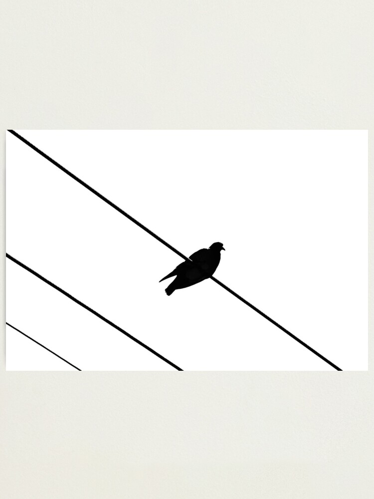 Alternate view of Bird on a Wire Photographic Print