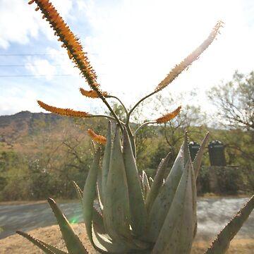 Swazi Flower  by raquelfletcher