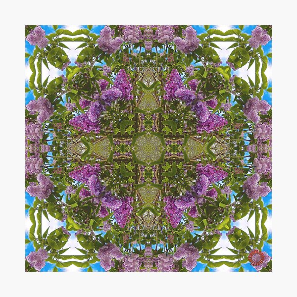 FLORAL ~ D1G1TAL-M00DZ ~ Lilac, Bumblebee and Variations by tasmanianartist Photographic Print