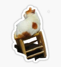 Cat playing perched Sticker