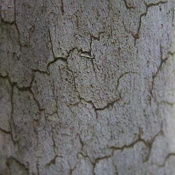 Swaziland Bark 5 by raquelfletcher