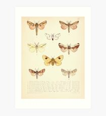 Aid to the identification of insects Charles Owen Waterhouse 1890 V1 V2 186 Various Art Print