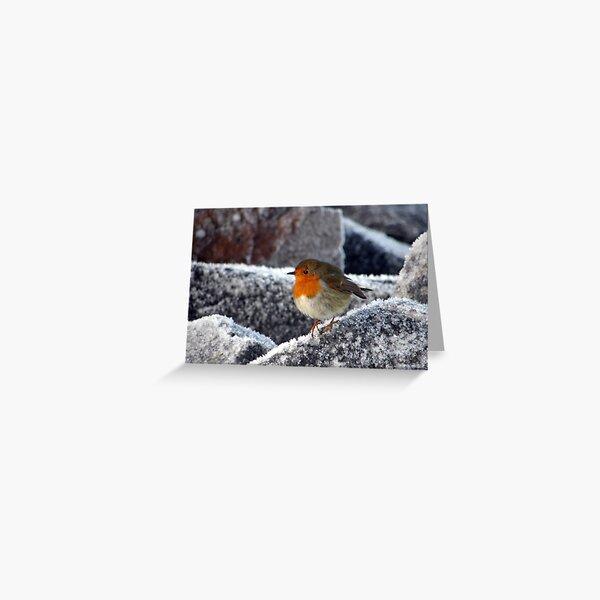 Robin on Cromarty sea wall Greeting Card