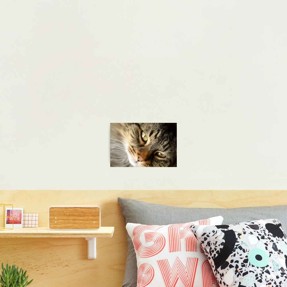 Come Hither Photographic Print
