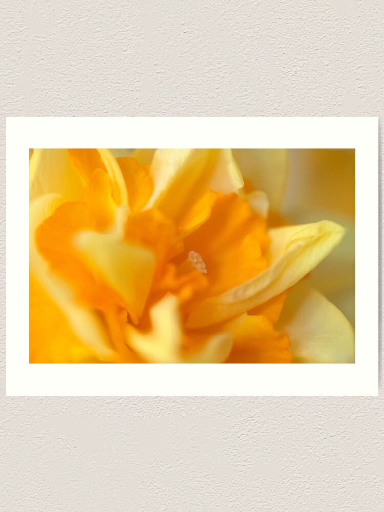 Alternate view of Double Daffodil Art Print