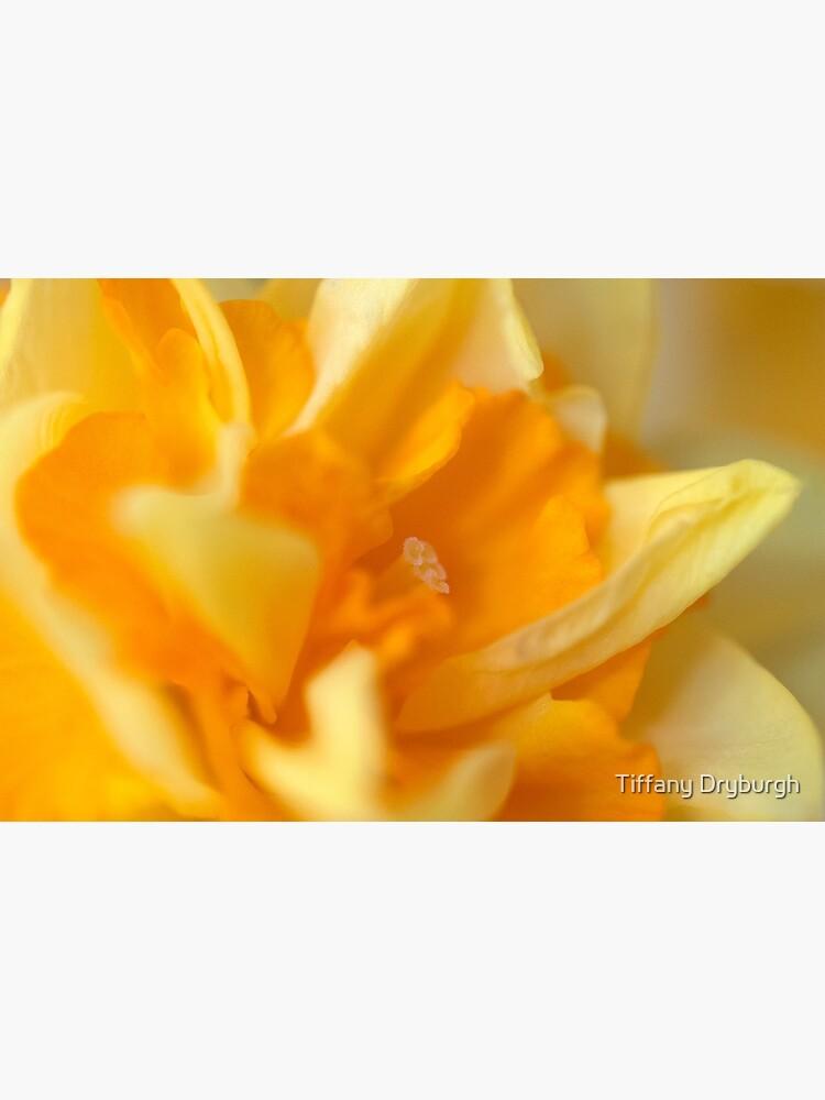 Double Daffodil by Tiffany
