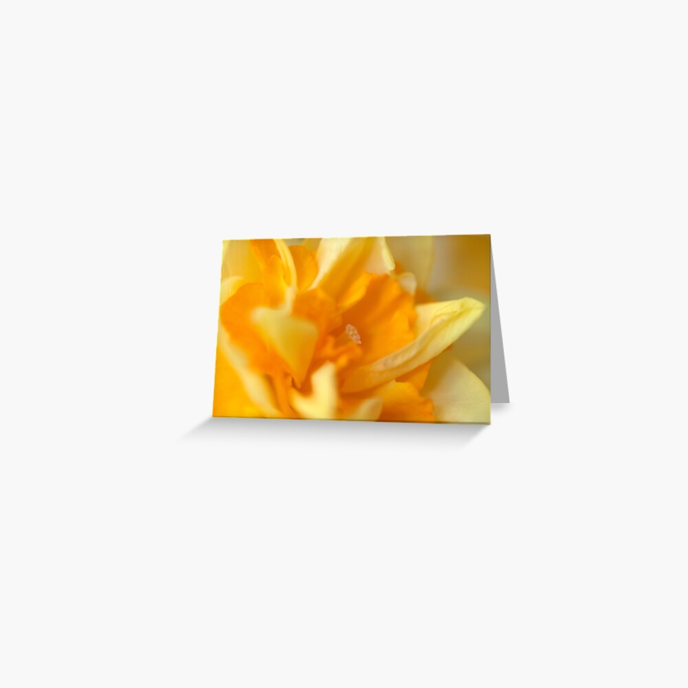 Double Daffodil Greeting Card