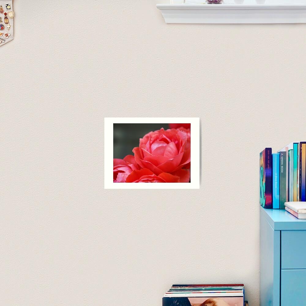 Coral Red Roses Art Print