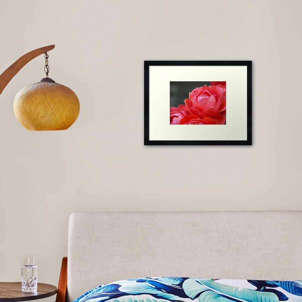 Coral Red Roses Framed Art Print