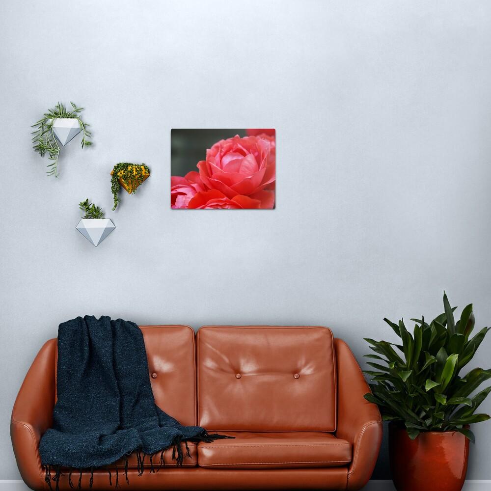Coral Red Roses Metal Print