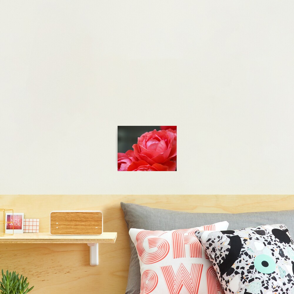 Coral Red Roses Photographic Print