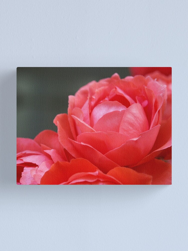 Alternate view of Coral Red Roses Canvas Print