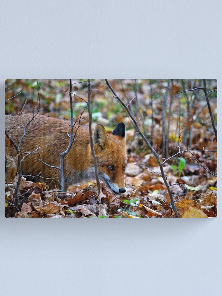 Alternate view of Friendly Fox Canvas Print