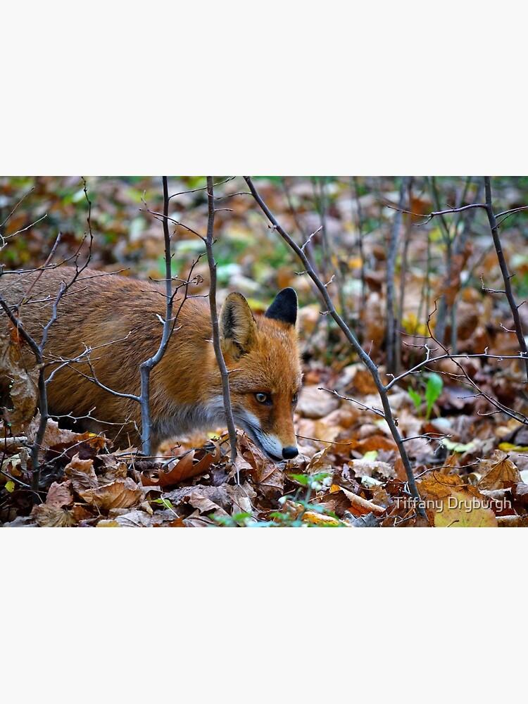 Friendly Fox by Tiffany