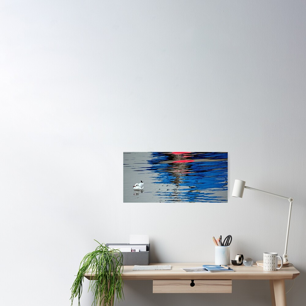 Gull with Reflections Poster