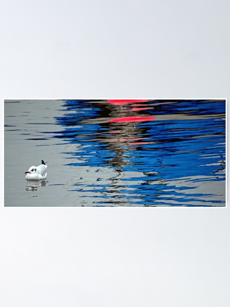Alternate view of Gull with Reflections Poster