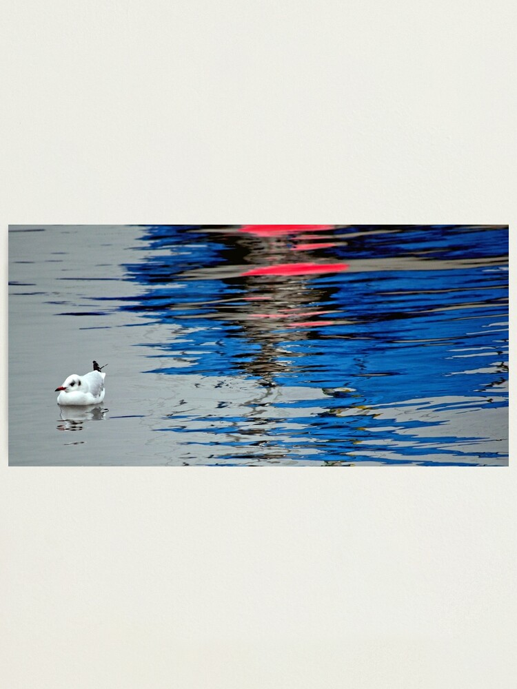 Alternate view of Gull with Reflections Photographic Print