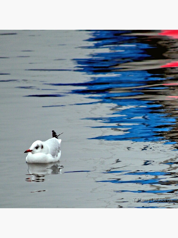 Gull with Reflections by Tiffany