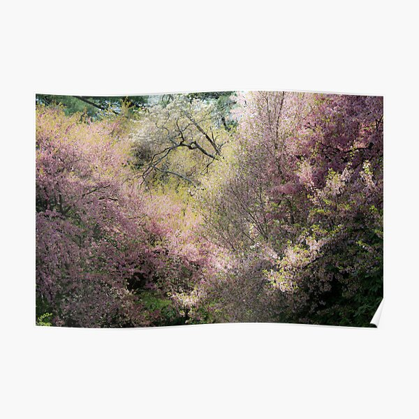 The Softness of Spring Poster