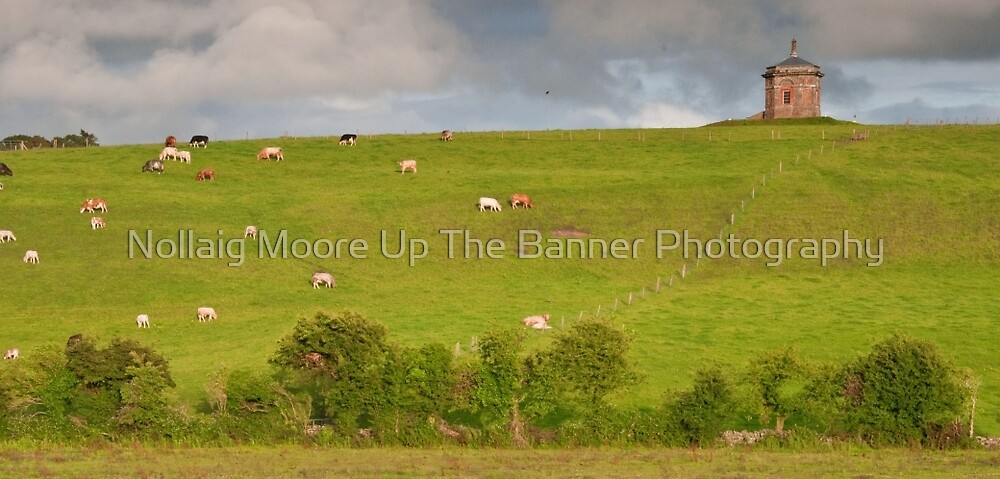 rural ireland scenic nature cows countryside landscape by Noel Moore Up The Banner Photography