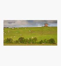 rural ireland scenic nature cows countryside landscape Photographic Print