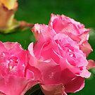 Raindrops on Roses..... by David Carton