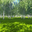 Sunny day in the birch grove by Marsea