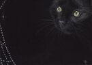 Cat and cobweb by Redbarron