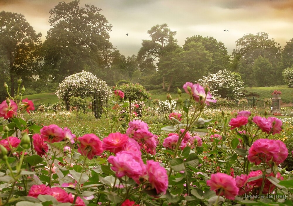 Roses in the Mist by Jessica Jenney
