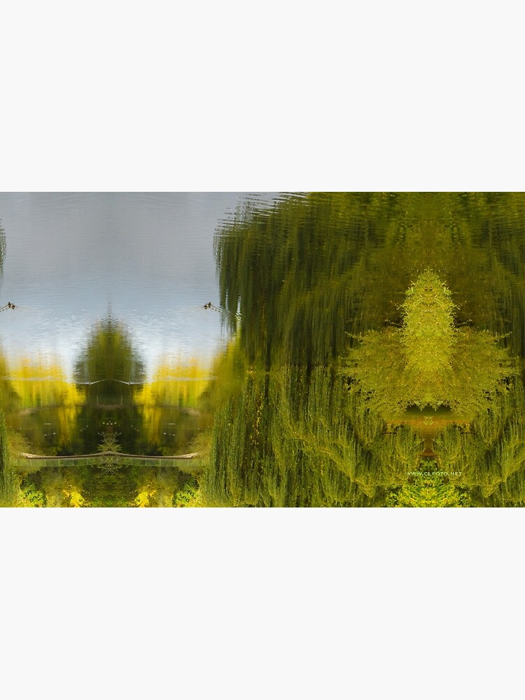 Reflected Willow by leemcintyre