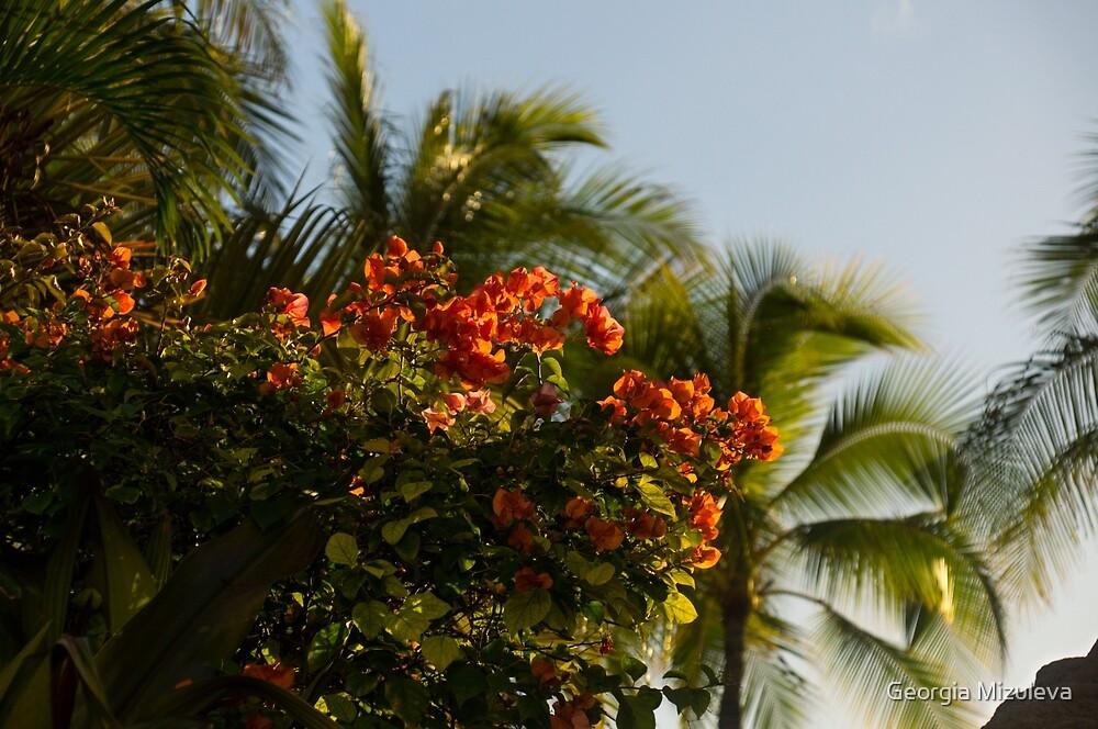 Bougainvilleas and Palm Trees Swaying in the Wind in Waikiki, Honolulu, Hawaii by Georgia Mizuleva