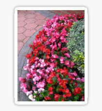 A Multitude of Begonias Sticker