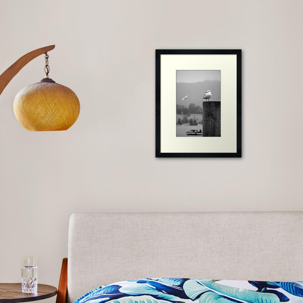 Gull Gazing, Lake Zurich Framed Art Print