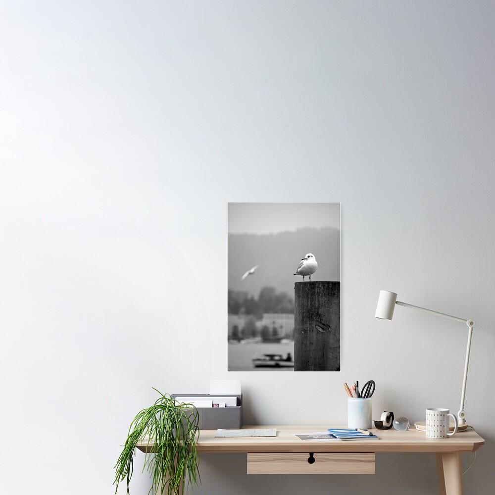 Gull Gazing, Lake Zurich Poster