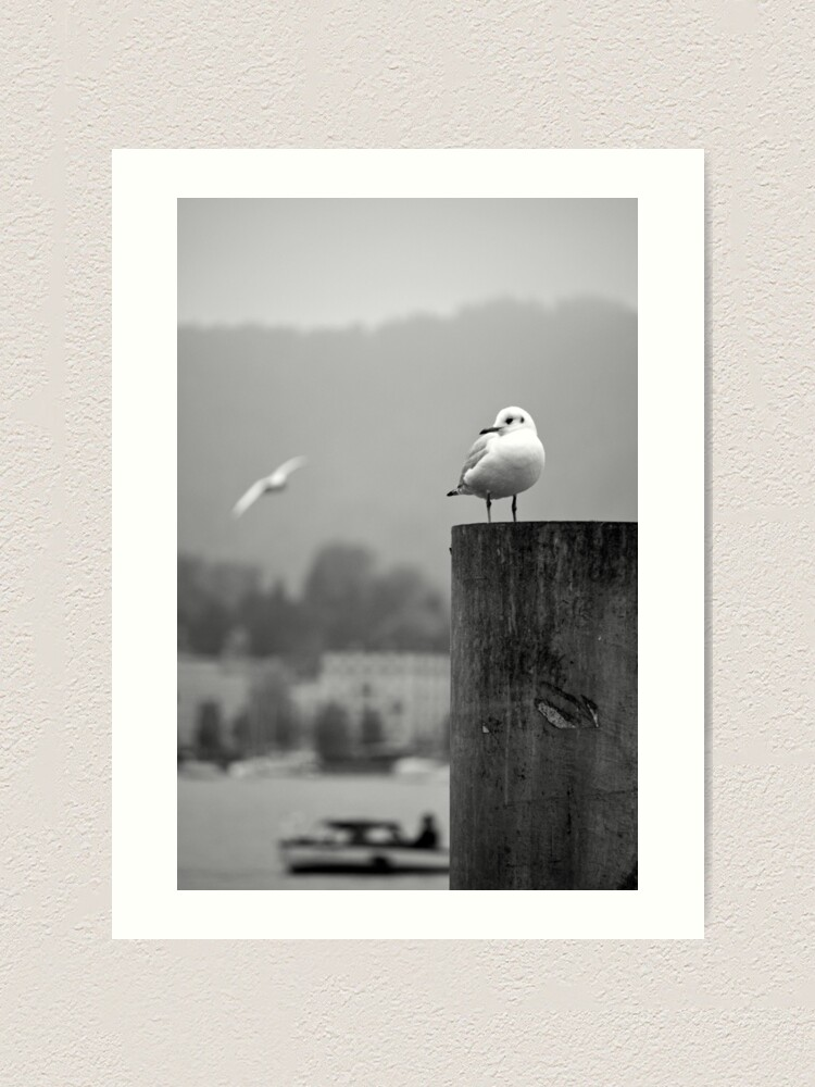 Alternate view of Gull Gazing, Lake Zurich Art Print