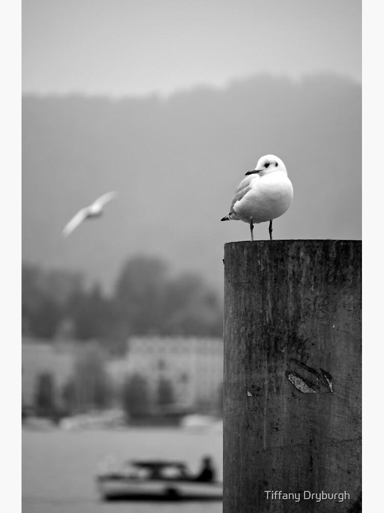 Gull Gazing, Lake Zurich by Tiffany