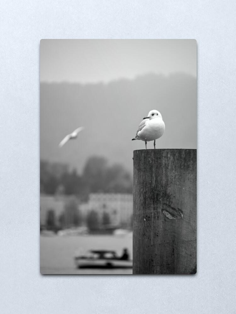 Alternate view of Gull Gazing, Lake Zurich Metal Print