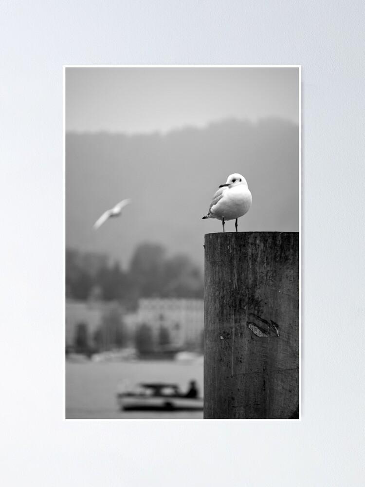 Alternate view of Gull Gazing, Lake Zurich Poster