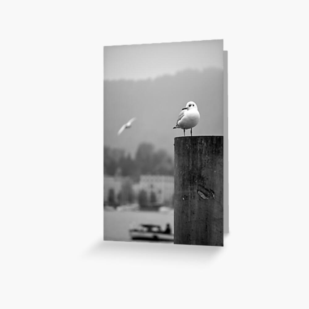 Gull Gazing, Lake Zurich Greeting Card