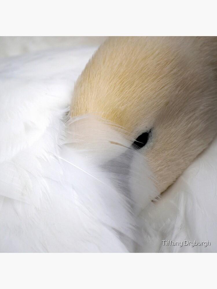Shy Swan by Tiffany
