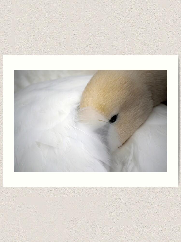 Alternate view of Shy Swan Art Print