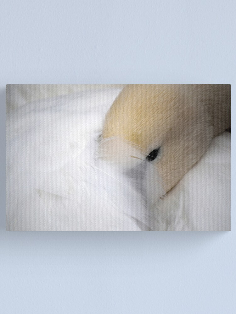 Alternate view of Shy Swan Canvas Print