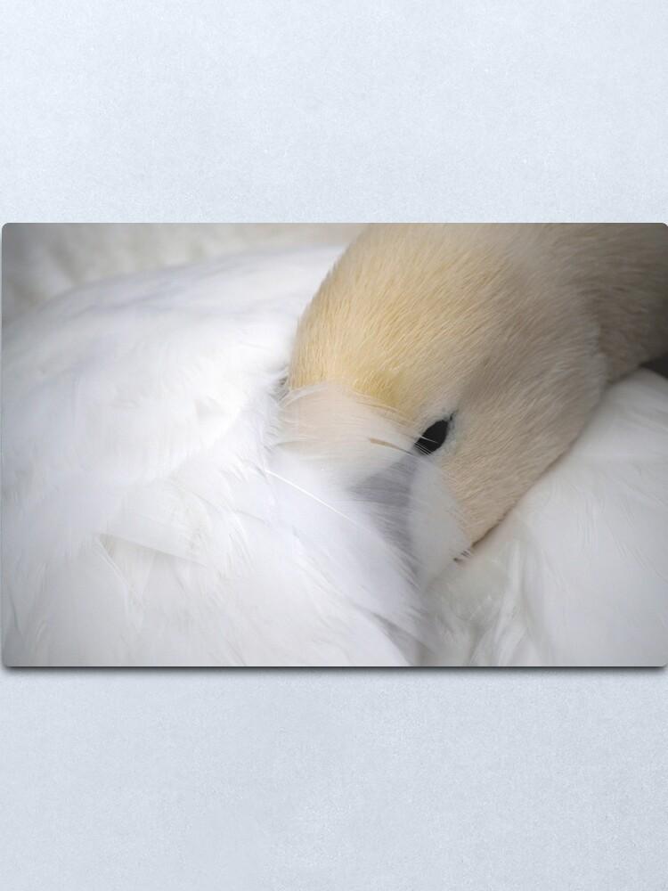 Alternate view of Shy Swan Metal Print