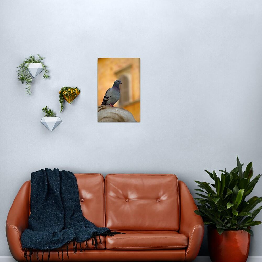 Posing Pigeon Metal Print
