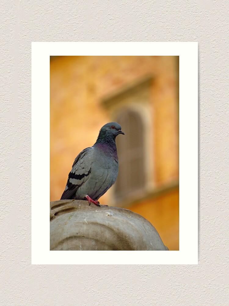 Alternate view of Posing Pigeon Art Print