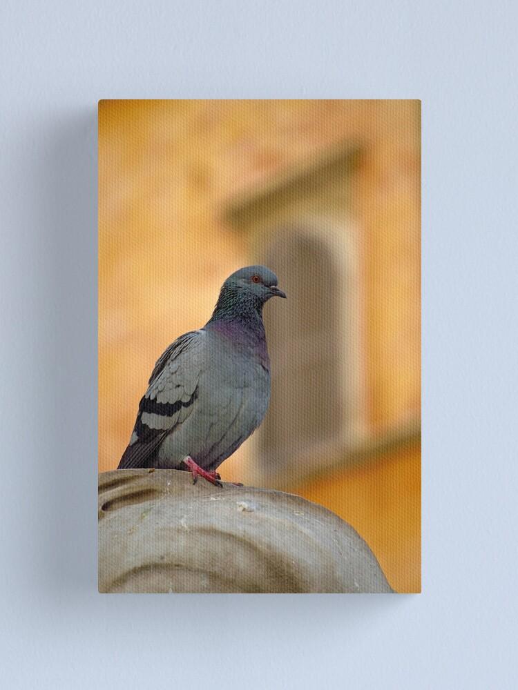 Alternate view of Posing Pigeon Canvas Print
