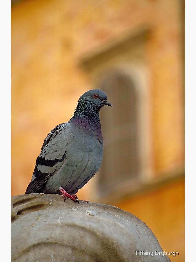 Posing Pigeon by Tiffany