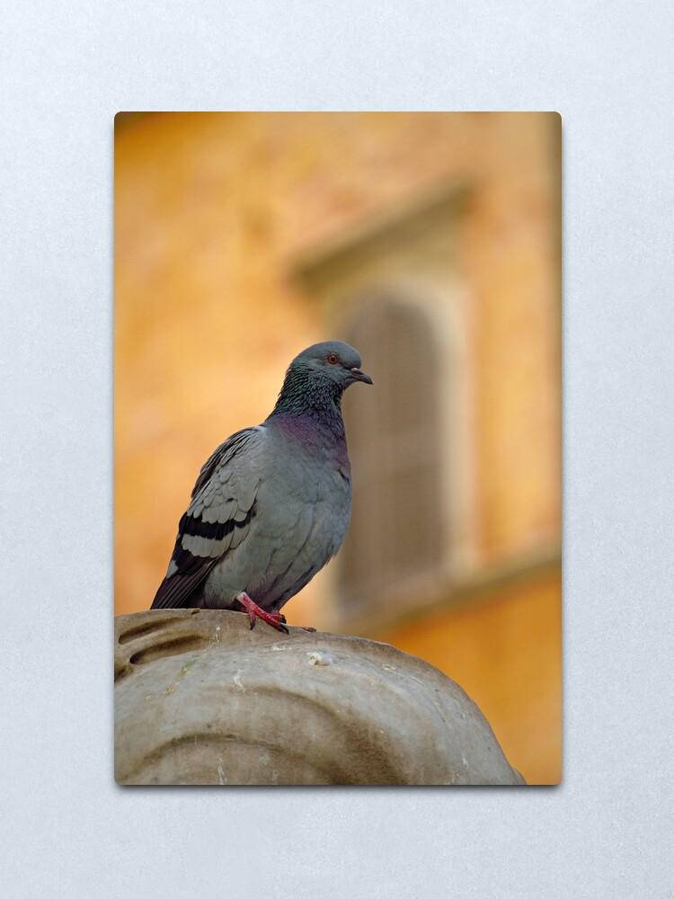 Alternate view of Posing Pigeon Metal Print