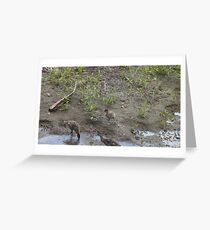 Five Little Ducks Greeting Card