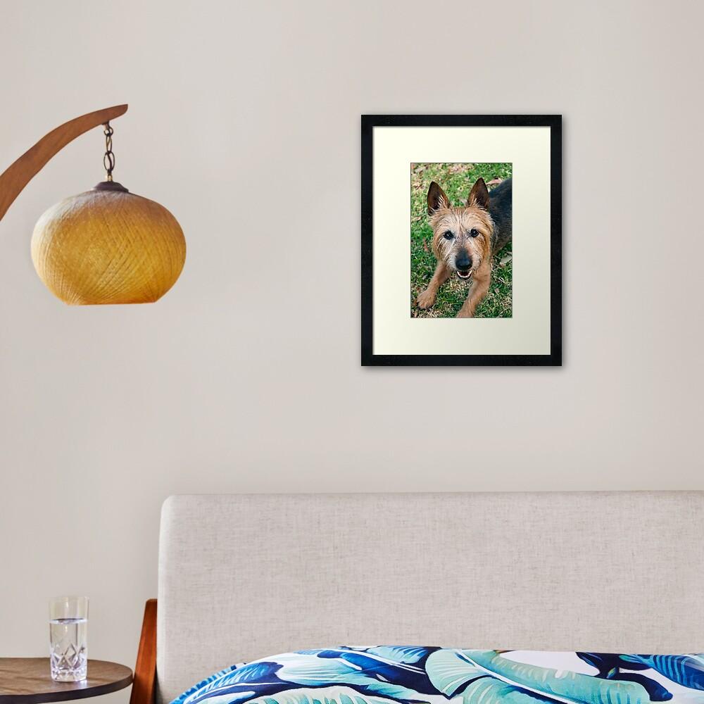The Happy Terrier Framed Art Print